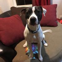 Adopt A Pet :: Lolita - Kirby, TX