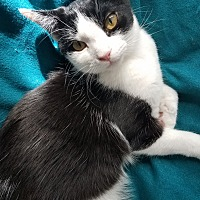 Adopt A Pet :: Melvin - Columbus, OH