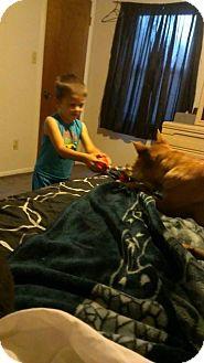 Shar Pei Mix Dog for adoption in Mira Loma, California - Izzabella