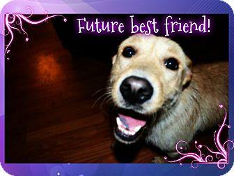 Labrador Retriever/Terrier (Unknown Type, Medium) Mix Dog for adoption in Homewood, Alabama - Harriet