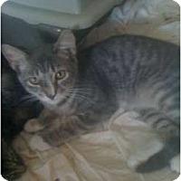 Adopt A Pet :: Zach - Mobile, AL