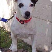 Adopt A Pet :: ELLIOTT - Phoenix, AZ