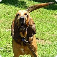 Adopt A Pet :: Hunter - Dallas, TX