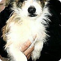 Adopt A Pet :: Gabriella - FOSTER NEEDED - Seattle, WA