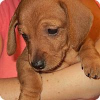 Adopt A Pet :: Genivee - Greenville, RI