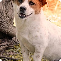 Adopt A Pet :: Mike in CT - East Hartford, CT