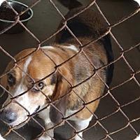 Adopt A Pet :: Chubs - Marianna, FL