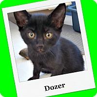 Adopt A Pet :: Dozer - Tombstone, AZ