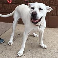 Adopt A Pet :: Blanca - Tomball, TX