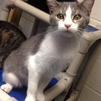 Adopt A Pet :: Irene - Anderson, IN