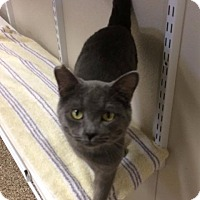 Adopt A Pet :: Chubby - Fremont, OH