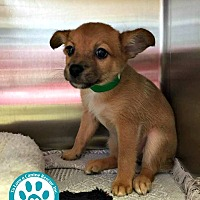 Adopt A Pet :: London - Kimberton, PA