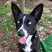 Adopt A Pet :: Eden - Brattleboro, VT