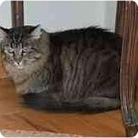 Adopt A Pet :: Sparkle - Modesto, CA