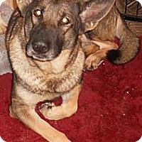 Adopt A Pet :: German Shepard Purebred - Aloha, OR