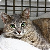 Adopt A Pet :: Kenai - Lombard, IL