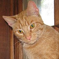 Adopt A Pet :: BunBun - Bedford, VA