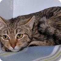 Adopt A Pet :: Fee Fee - Medina, OH