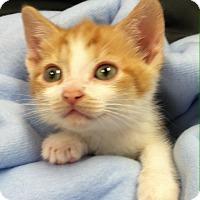 Adopt A Pet :: Jessie - Port Republic, MD