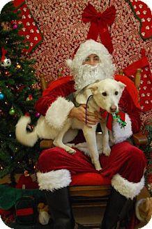 Shepherd (Unknown Type) Mix Dog for adoption in Newburgh, Indiana - Teesha Loyal girl