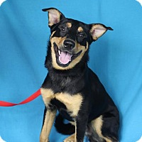 Adopt A Pet :: Jeremiah - Minneapolis, MN