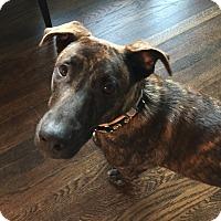 Adopt A Pet :: Charlie - Adoption Pending - Gig Harbor, WA