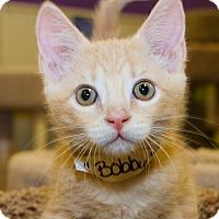 Adopt A Pet :: Bobby - Irvine, CA