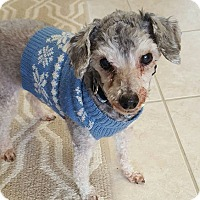 Adopt A Pet :: Tonto - Fennville, MI