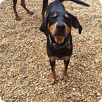Adopt A Pet :: Titan - North Brunswick, NJ