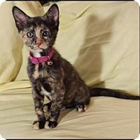 Adopt A Pet :: Addy - Orlando, FL