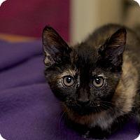 Adopt A Pet :: Priscilla - Medina, OH