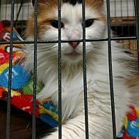Adopt A Pet :: Penny - Saginaw, MI