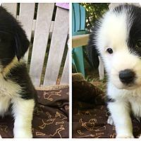 Adopt A Pet :: Timber - Charlotte, NC