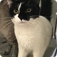 Adopt A Pet :: Winter - Newport, NC