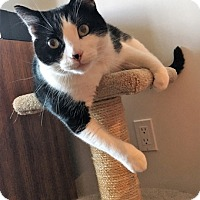 Adopt A Pet :: Cody - Vancouver, BC