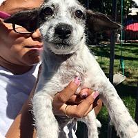 Adopt A Pet :: Giovanna - Santa Ana, CA