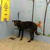 Adopt A Pet :: A506660 - San Bernardino, CA
