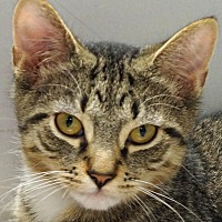Adopt A Pet :: Marvin - Sprakers, NY