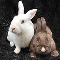 Adopt A Pet :: Augustus & Ayla - Watauga, TX