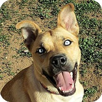 Labrador Retriever Mix Dog for adoption in Phoenix, Arizona - Lucky