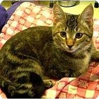 Adopt A Pet :: Johnny - Shelton, WA