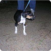 Adopt A Pet :: Roscoe - Glastonbury, CT