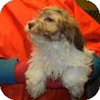 Adopt A Pet :: NIcholas ADOPTED!! - Antioch, IL
