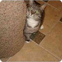 Adopt A Pet :: JESSE (PO) - Little Falls, NJ
