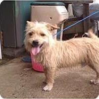 Adopt A Pet :: Chedder - Salem, NH