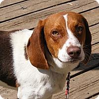 Adopt A Pet :: Nelson - Toledo, OH