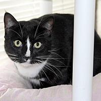 Adopt A Pet :: Myles - Harrison, NY