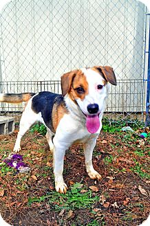 Collie Mix Dog for adoption in Plainfield, Illinois - Phoebe