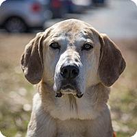 Adopt A Pet :: Wesley - Cumming, GA