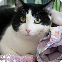 Adopt A Pet :: Heidi - Merrifield, VA